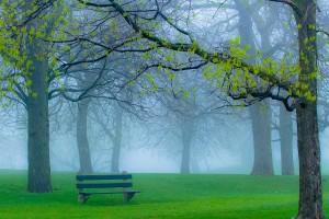 park wallpaper foggy