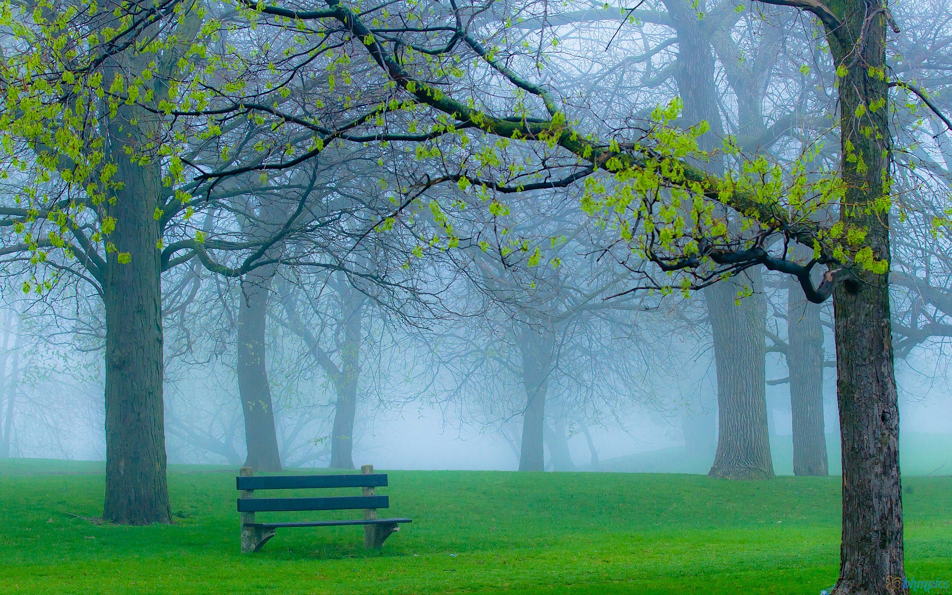 park wallpaper foggy