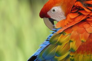 parrot bird photos