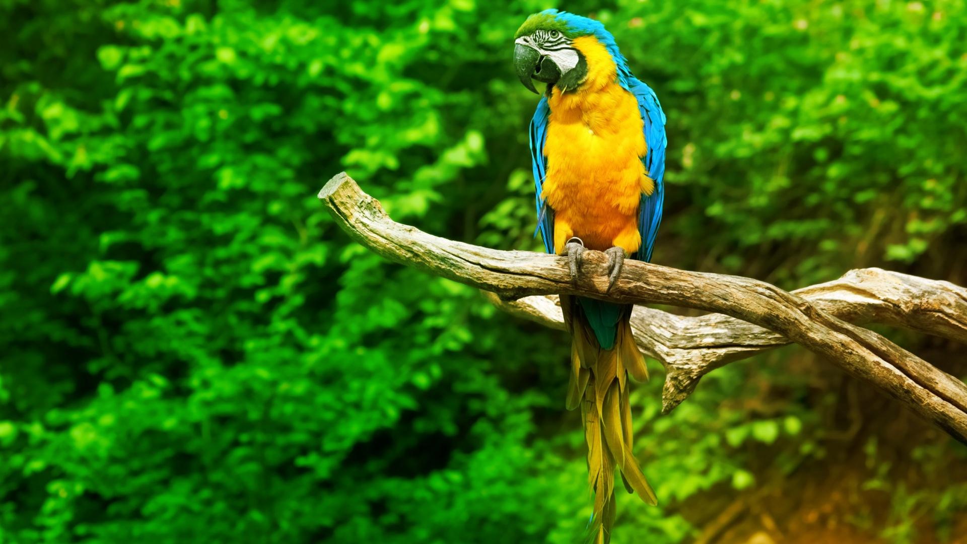 parrot images hd