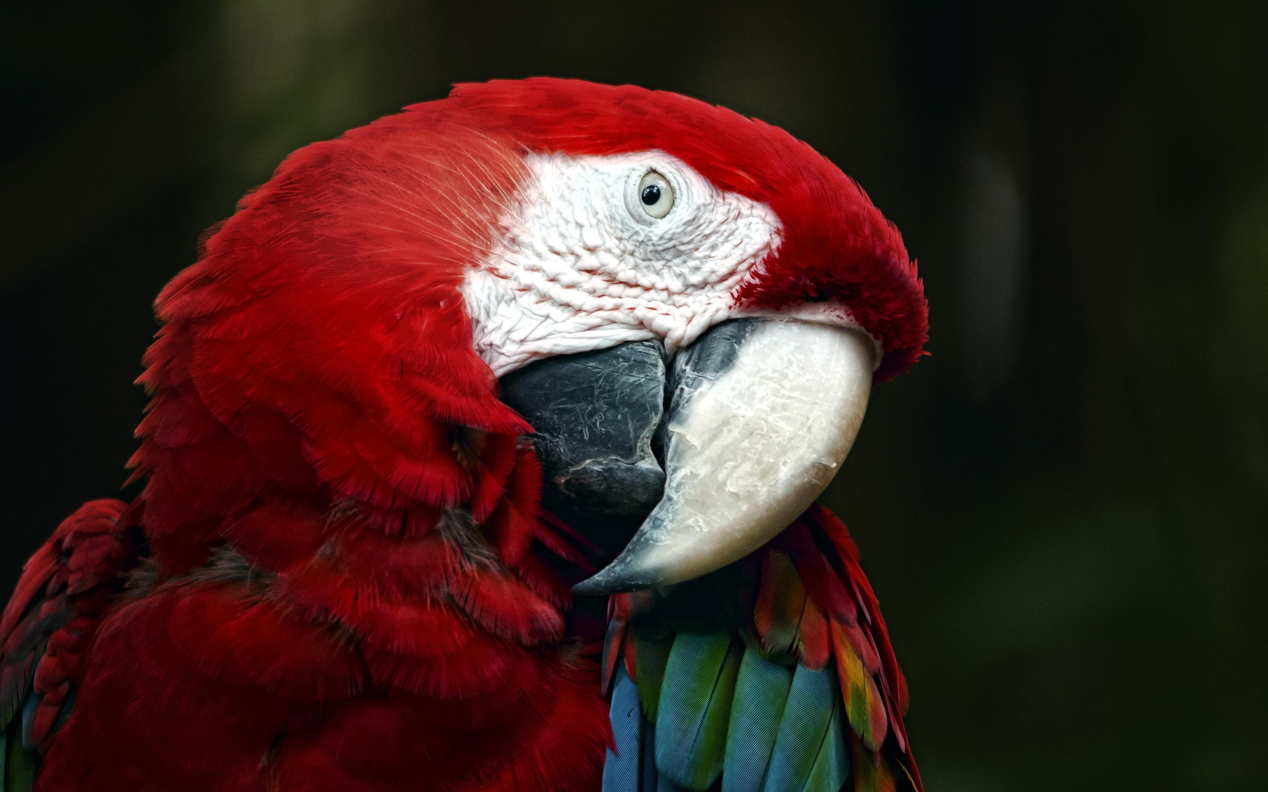 parrot images wallpaper