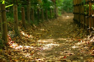 path wallpaper forest