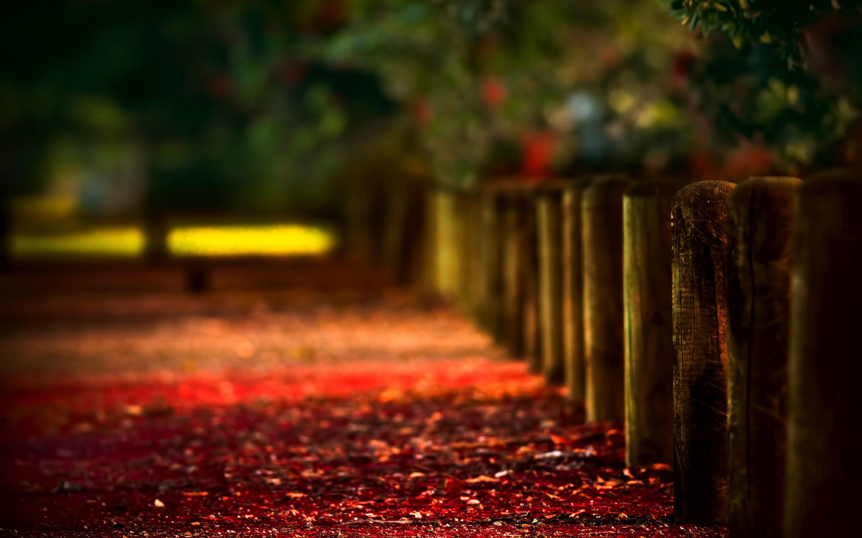 path wallpaper scenery