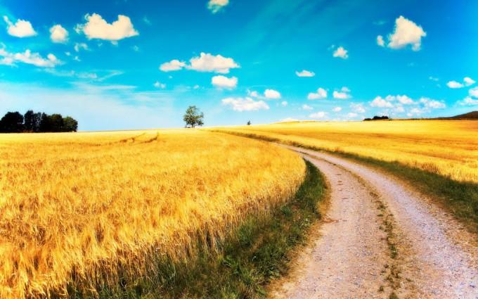 path wallpaper spring