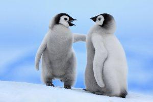 penguin image hd
