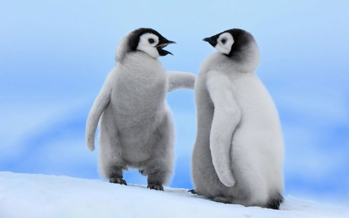 penguin image hd