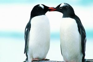 penguin images hd