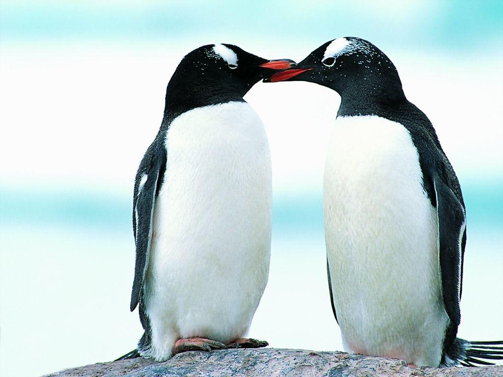 penguin images hd