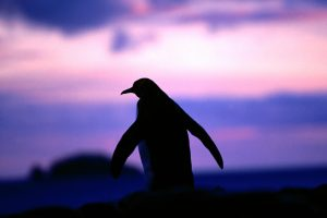 penguin pictures hd