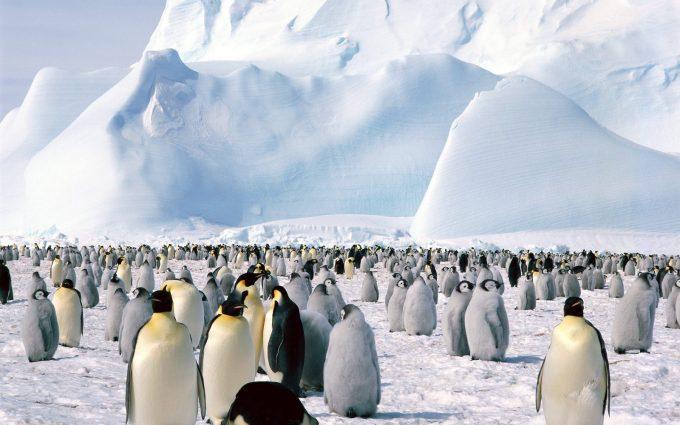 penguin wallpaper background