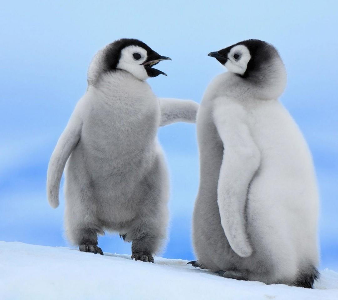 penguin wallpaper cute