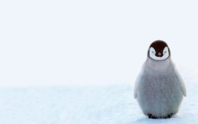 penguin wallpaper hd