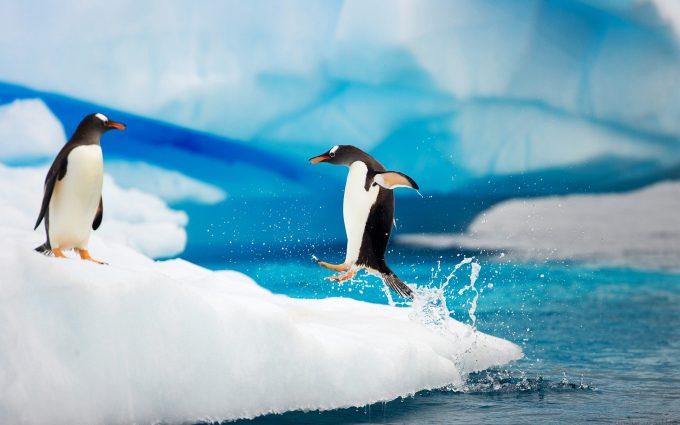 penguin wallpaper jump