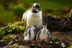 penguin wallpaper nest
