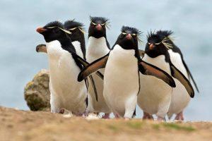penguin wallpaper ocean