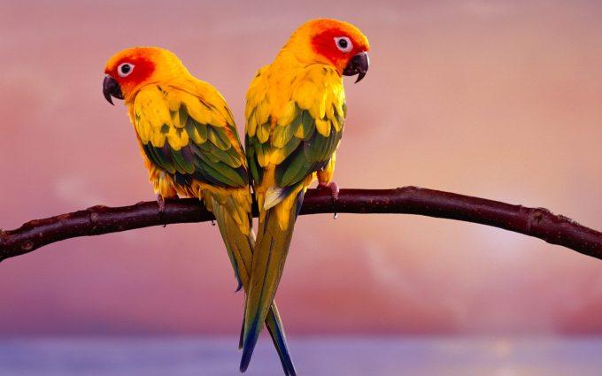 photo of parrot bird