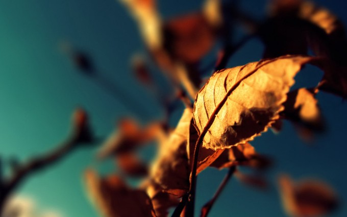 photography autumn