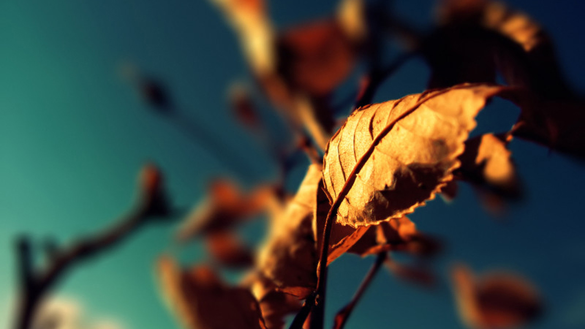 photography autumn