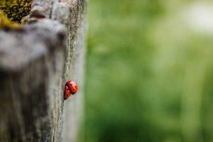 photography macro