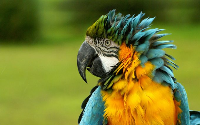 photos of macaws
