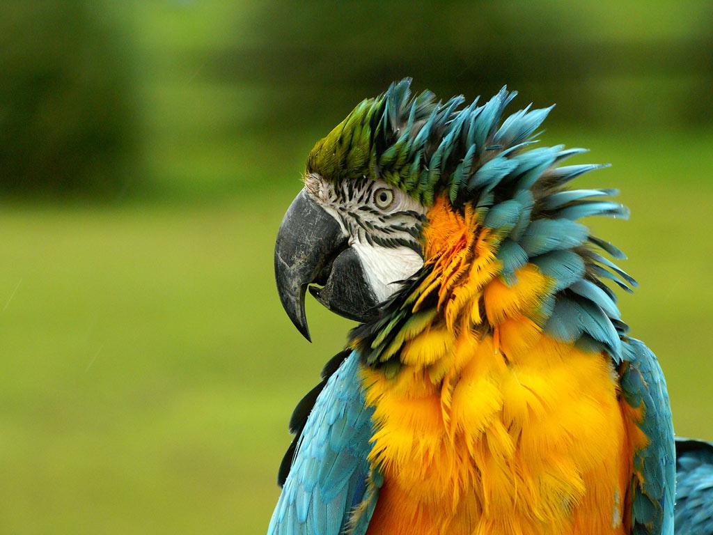 photos of macaws