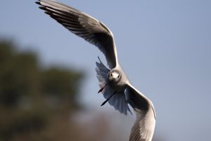 photos of seagulls