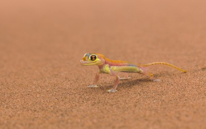 pic of lizard