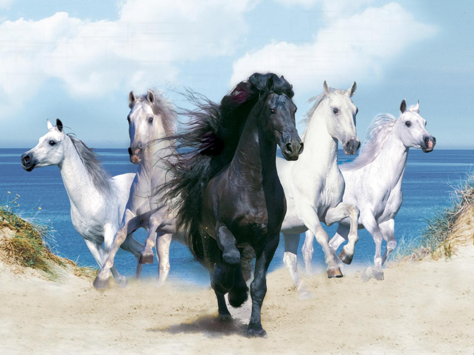 pics of horses