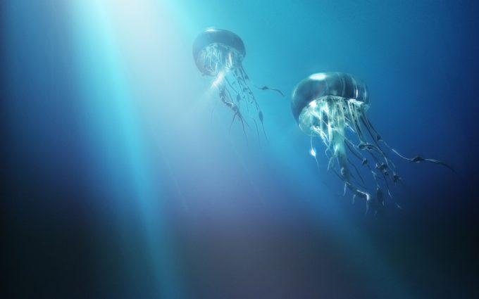 pics of jellyfish