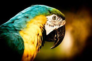 pics of macaws
