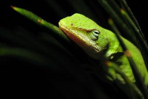 picture of a lizard