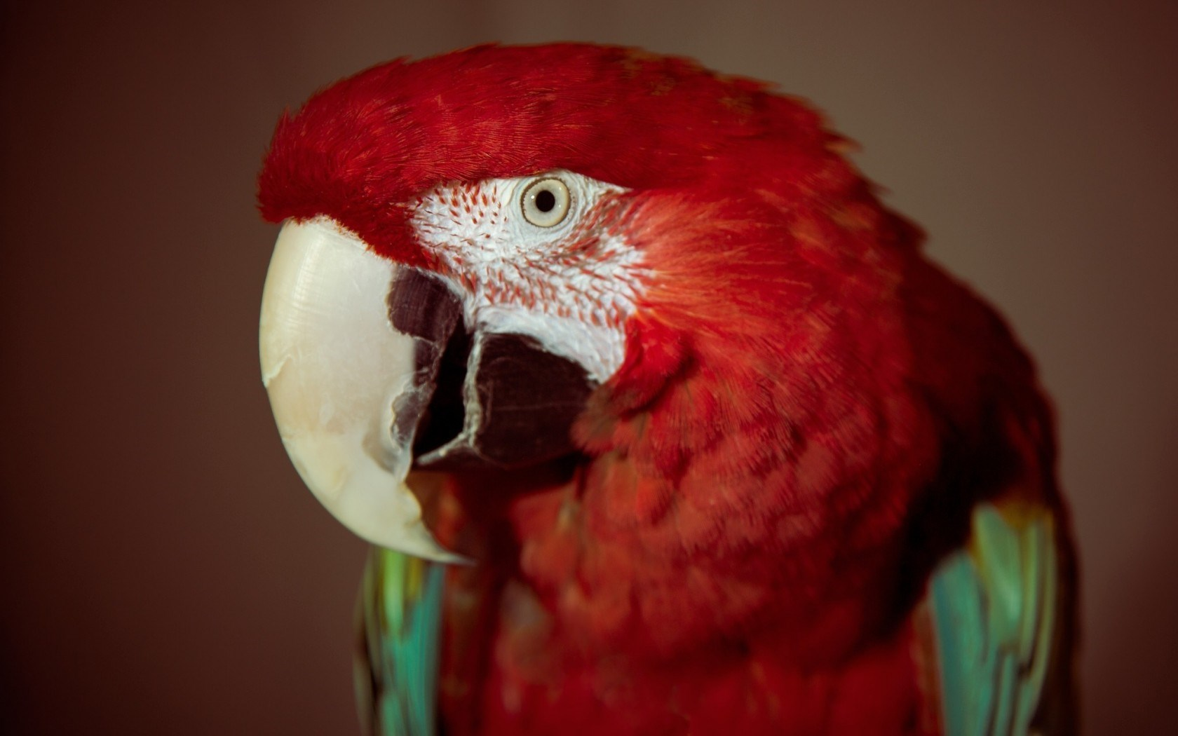 picture of a parrot