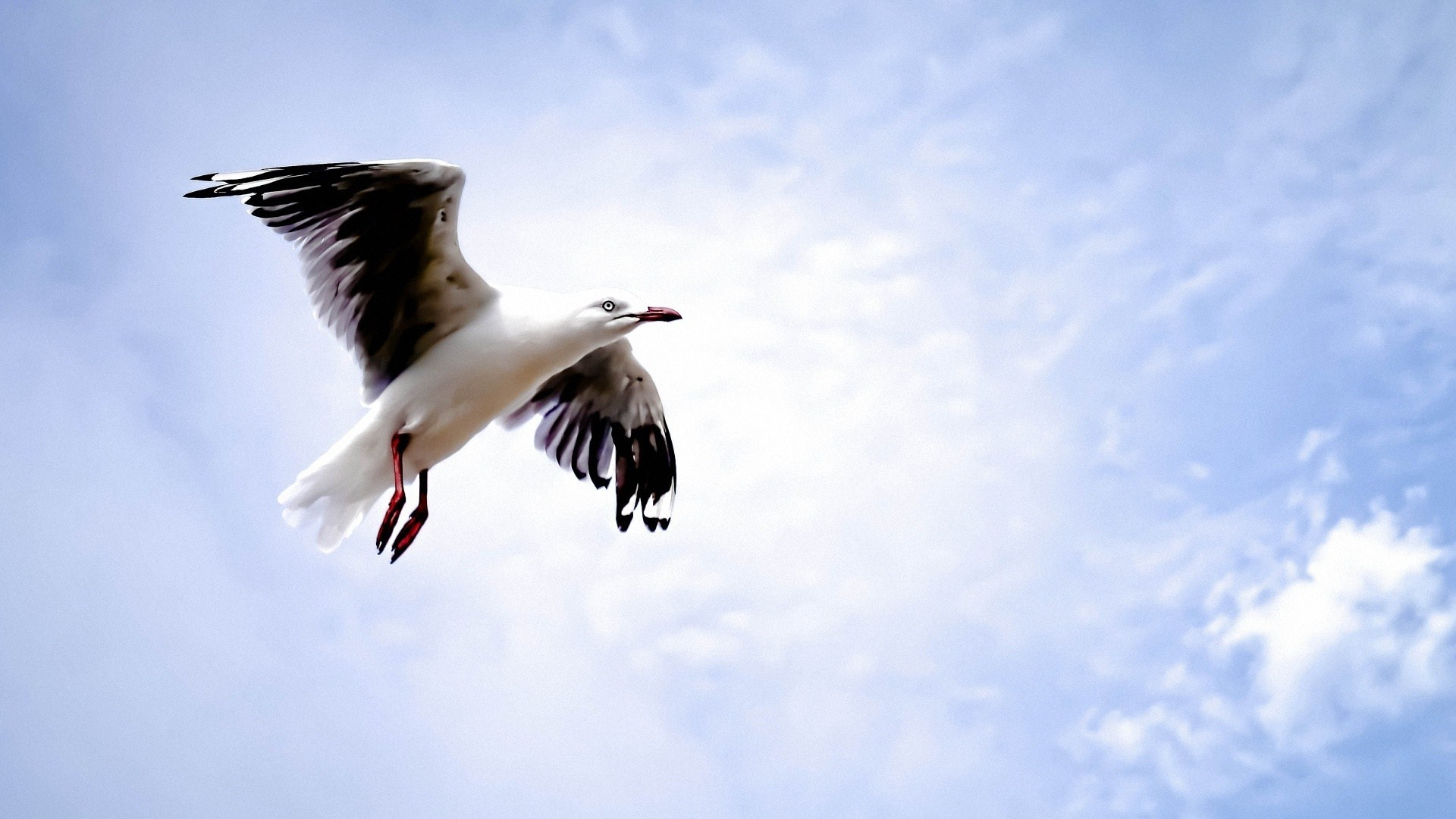 picture of a seagull
