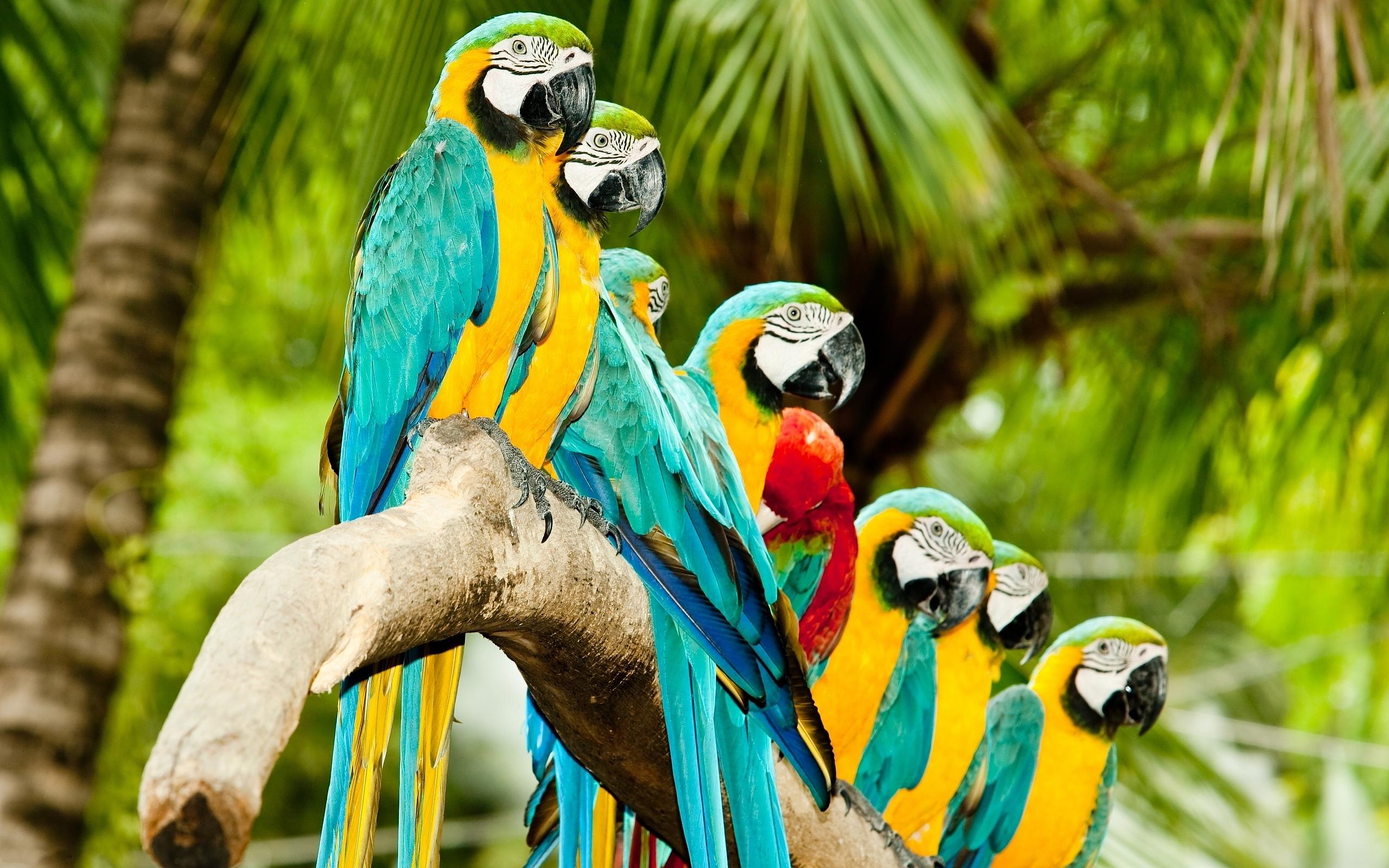 picture of parrots