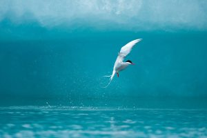 picture of seagull bird