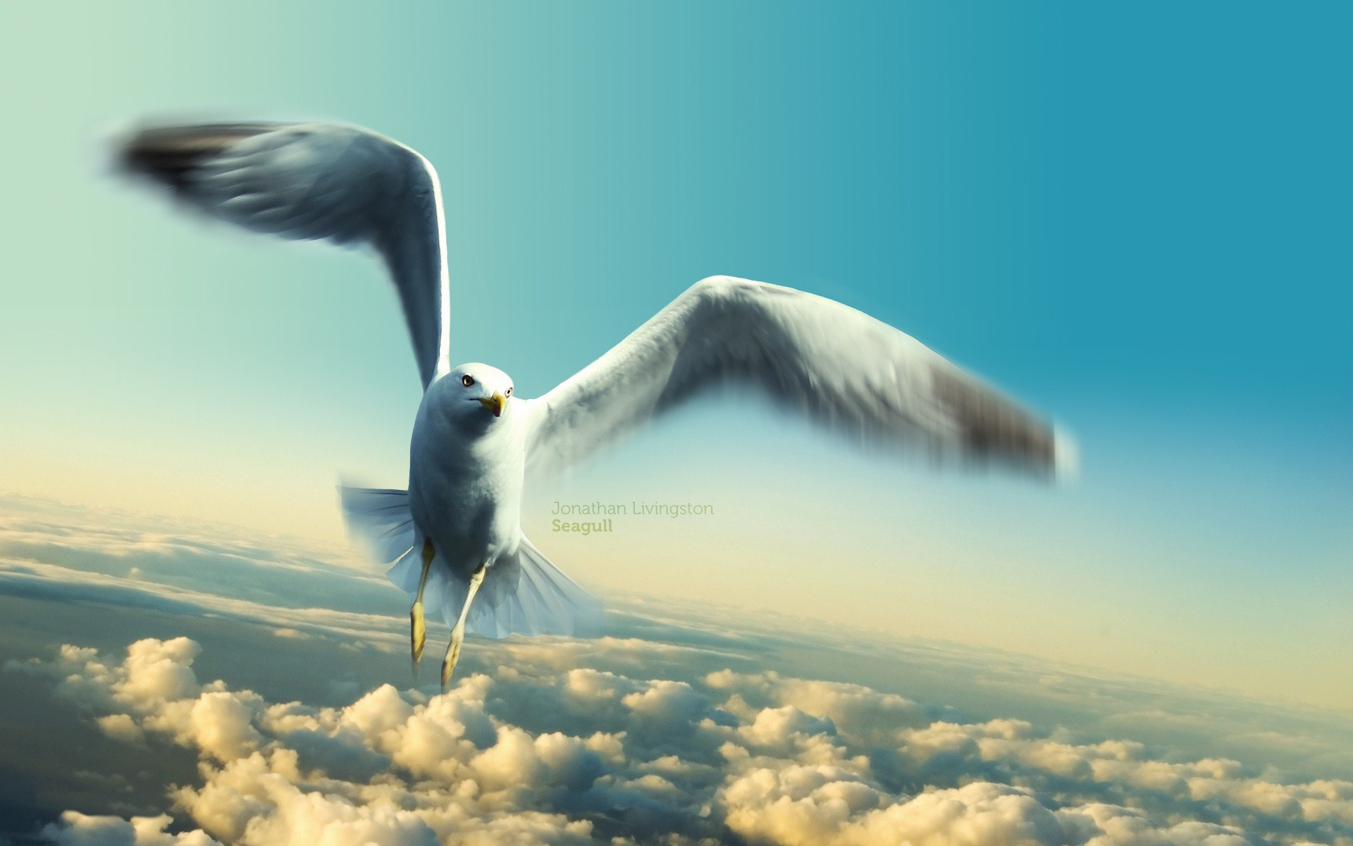 picture of seagulls