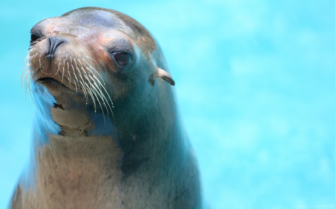 picture of seal