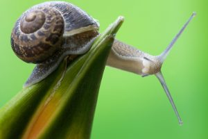 picture of turbo the snail