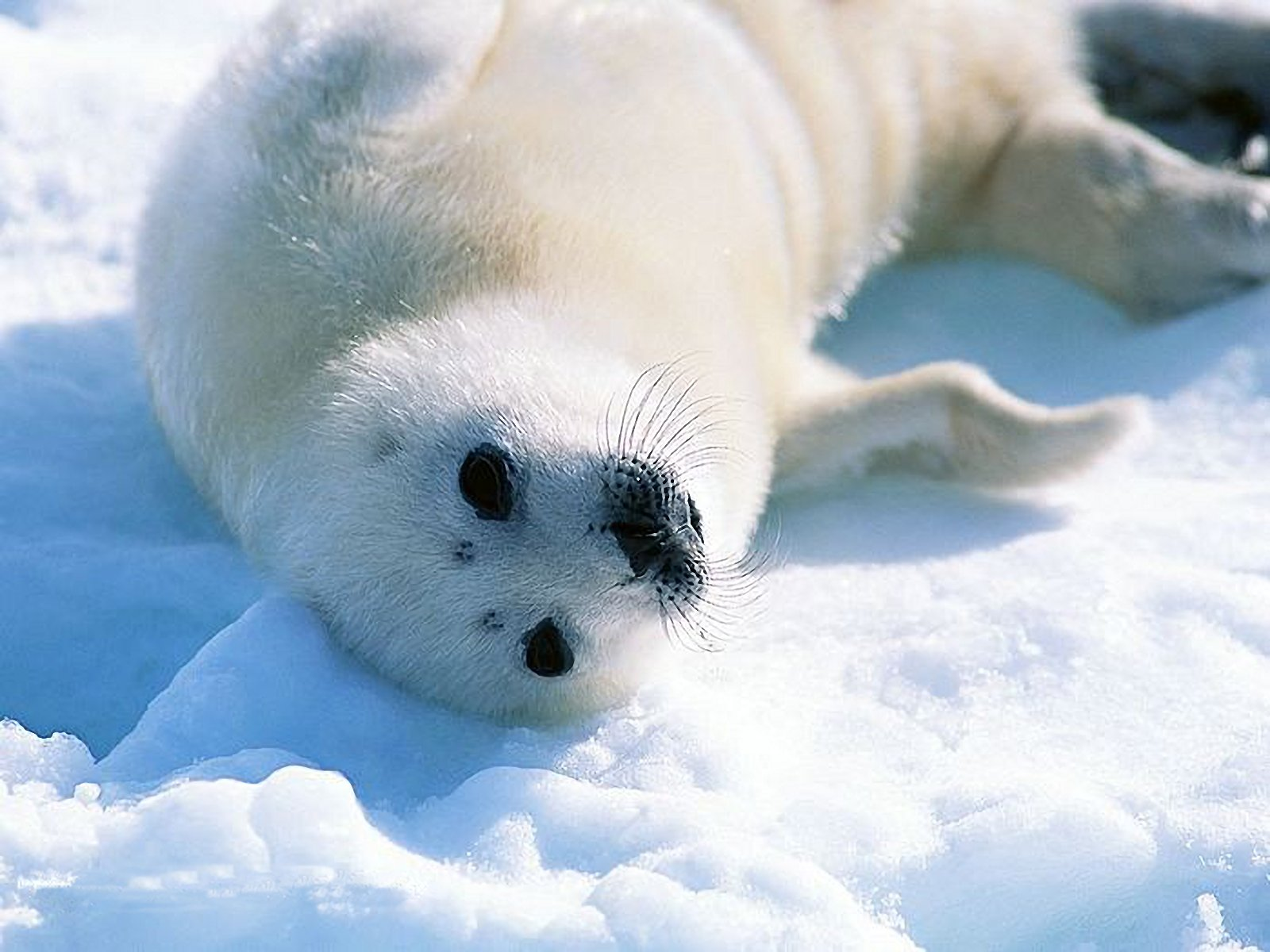picture seal