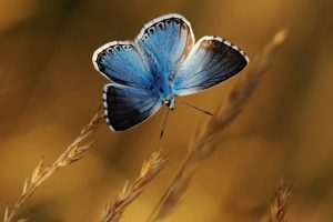 pictures butterfly