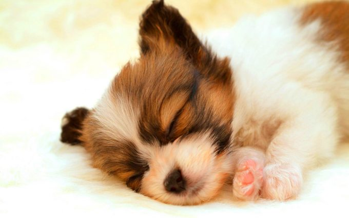 pictures cute animals