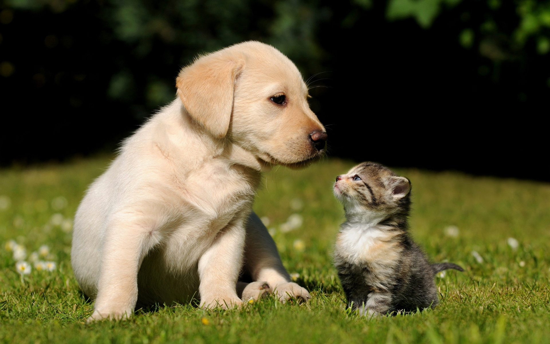 pictures of cute animals