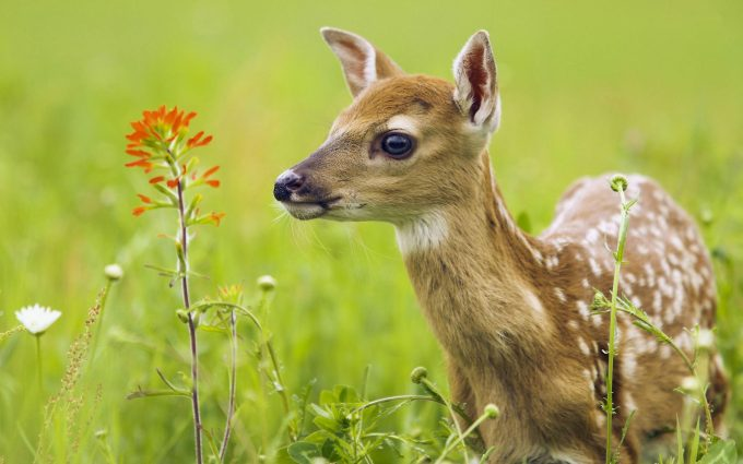 pictures of cute little animals