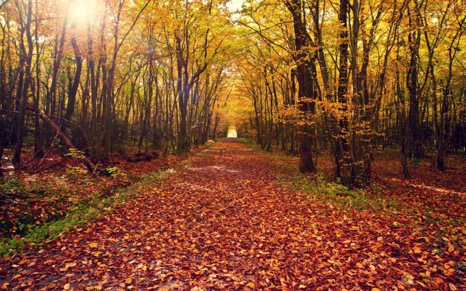 pictures of forests path