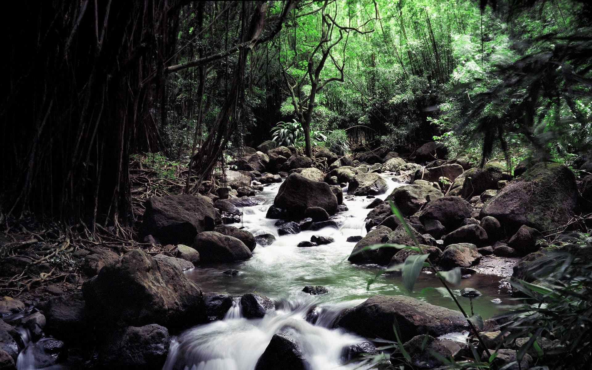 pictures of forests stream