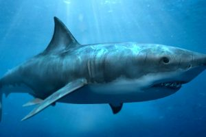 pictures of megalodon