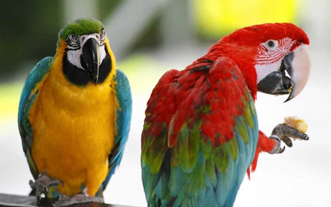 pictures of parrots