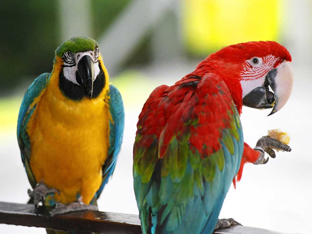 pictures of parrots