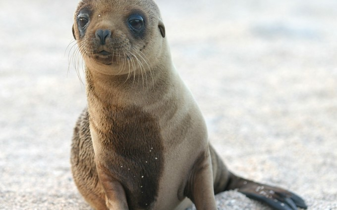 pictures of seals