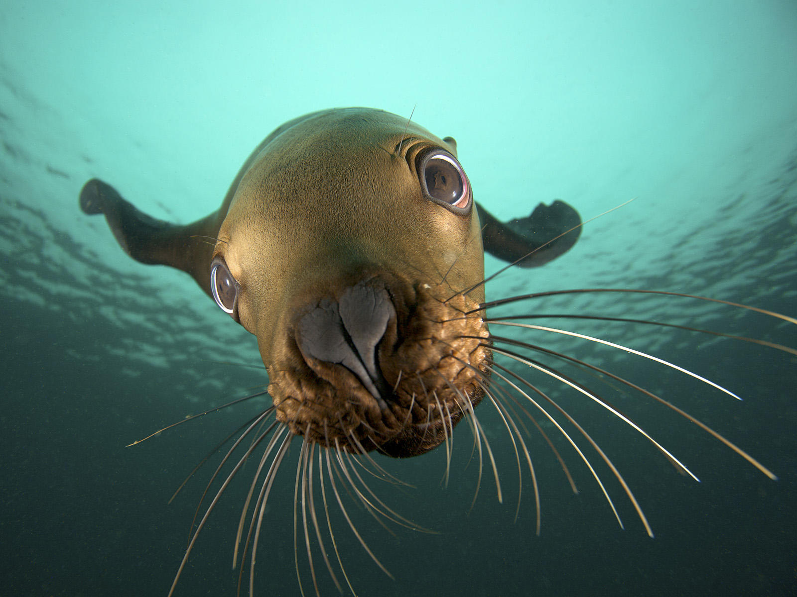 pictures of seals and sea lions
